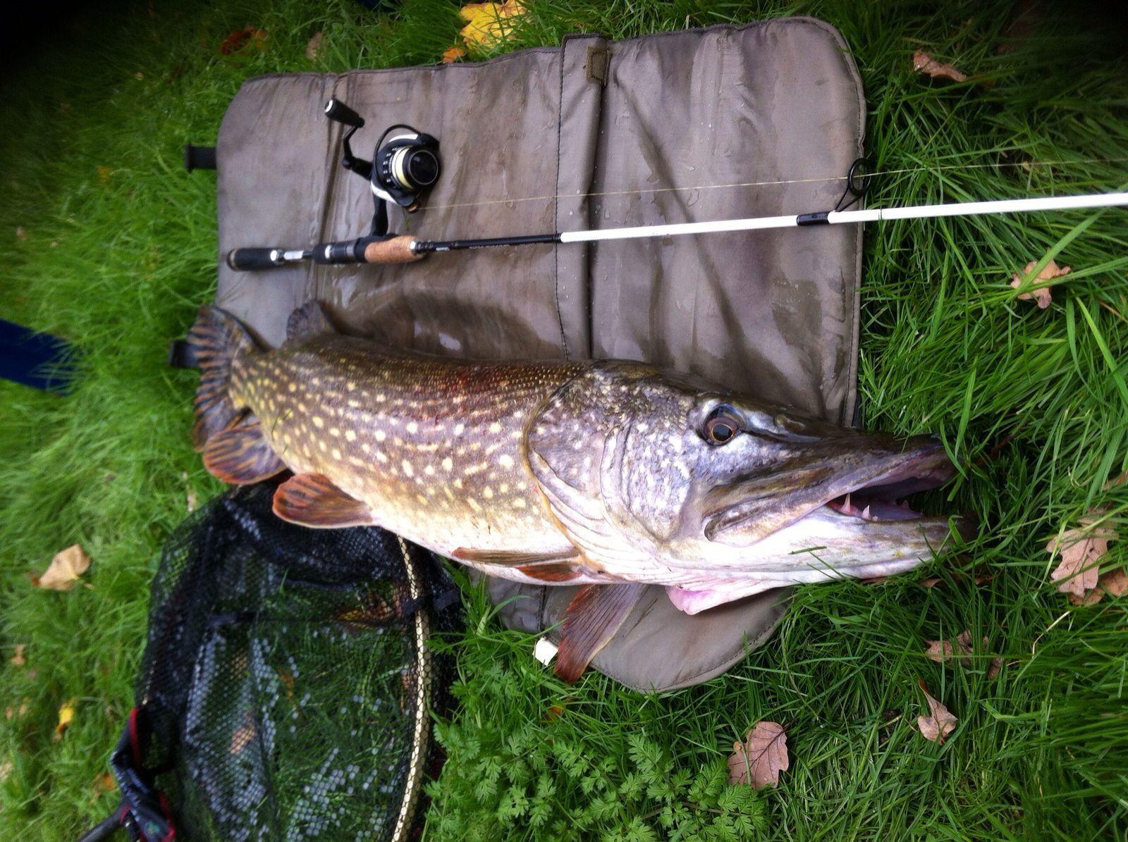 20-lb-pike-caught-pleasure-fishing-on-river-seven-larford-no-name-sorry