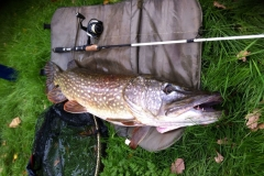 20-lb-pike-caught-pleasure-fishing-on-river-seven-larford-no-name-sorry